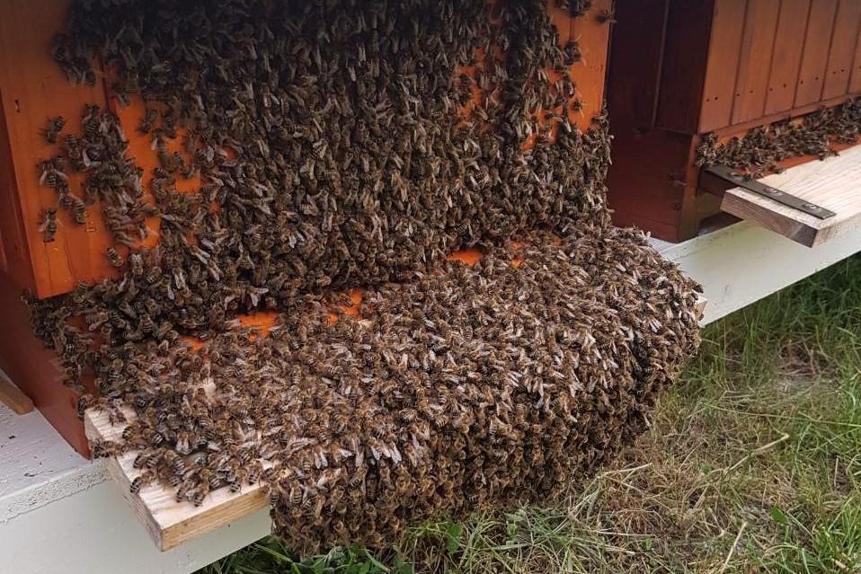 včely prilietajúce do úľa