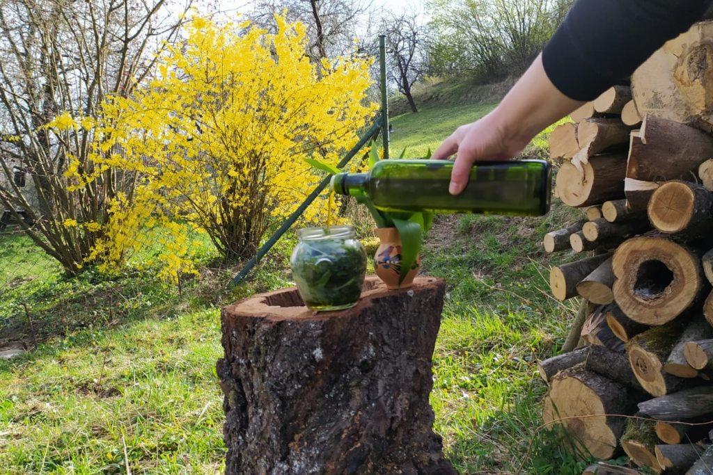 olivový olej s medvedím cesnakom